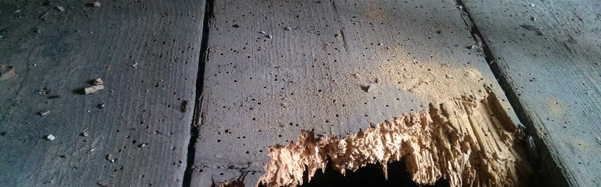 WOODWORM SPECIALISTS